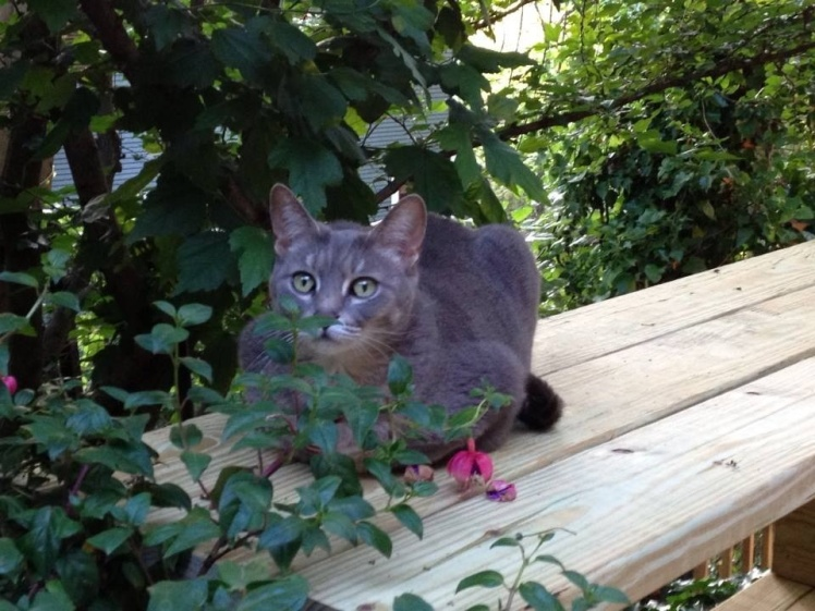 Scrub Kitty:  Life Lessons from the Alley