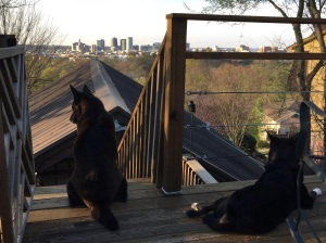 Coops and Sophie are always up for some chill time on the top deck.
